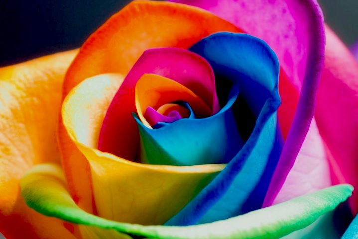 The_Perfect_Rainbow_Rose_by_HappyRoses